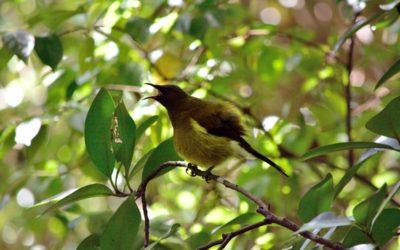 Birdsong at Dawn